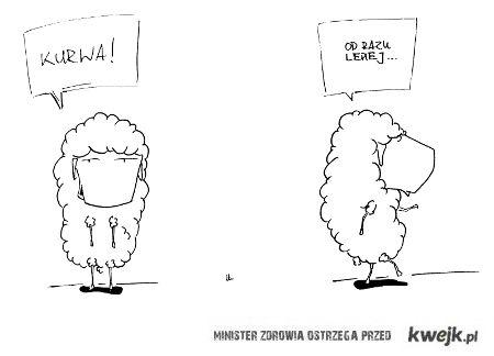 owieczka