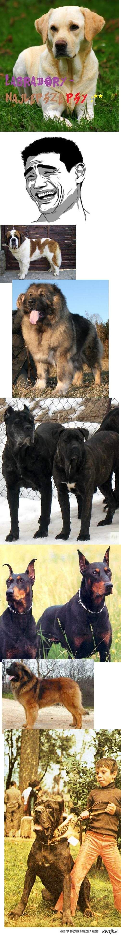 To są psy!