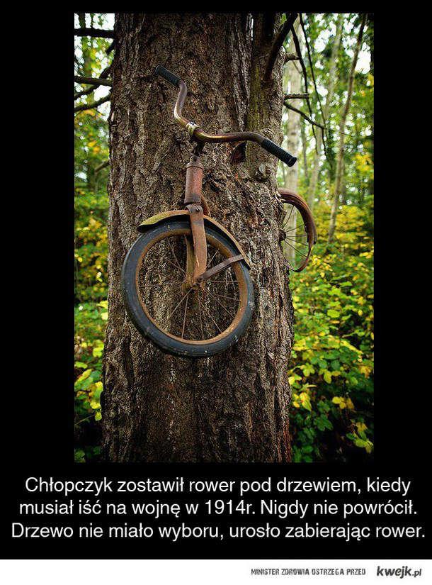 Chłopczyk, rower i drzewo