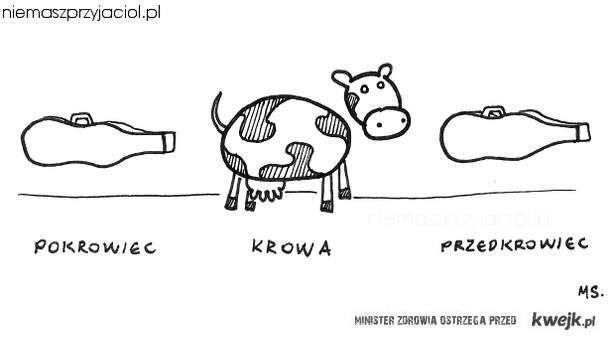 Etapy krowy