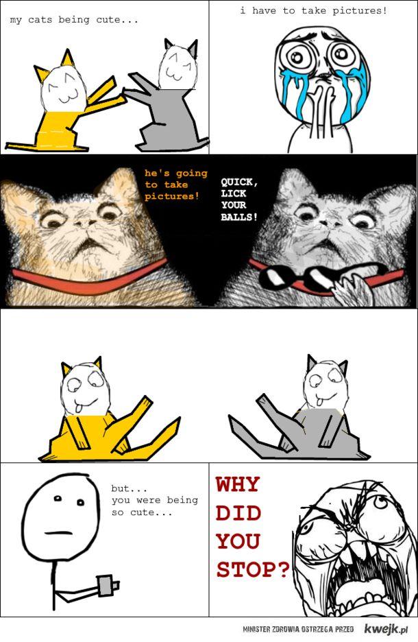 Koty i zdjęcia.