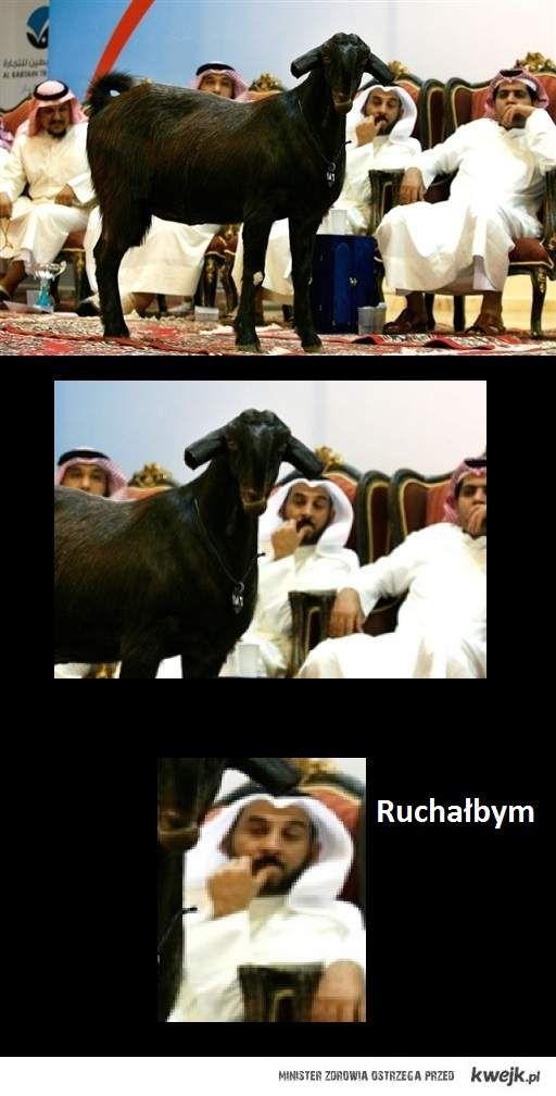 Biedne życie kozy w Arabii