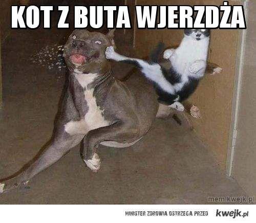 kot z buta wjerzdża