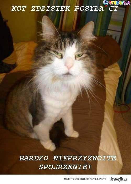 Kot Zdzisiek