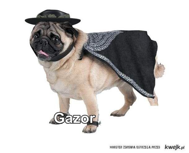 gazorek