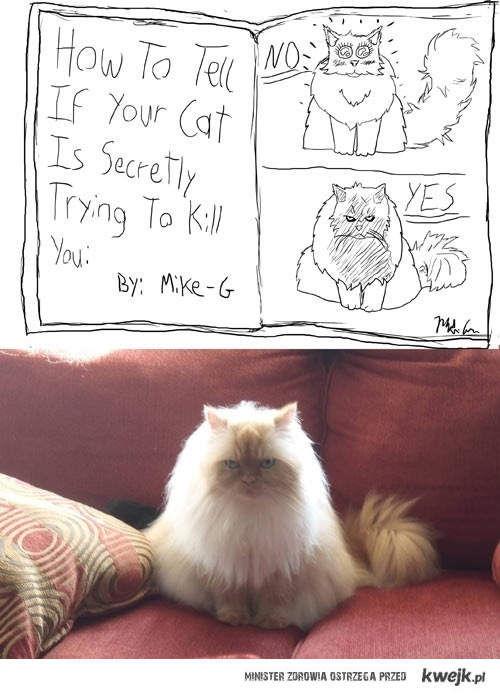 czy twoj kot chce cie zabic