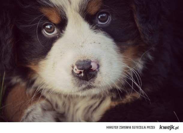 Pies - dla ciebie słodki szczeniaczek , dla mnie - całe życie