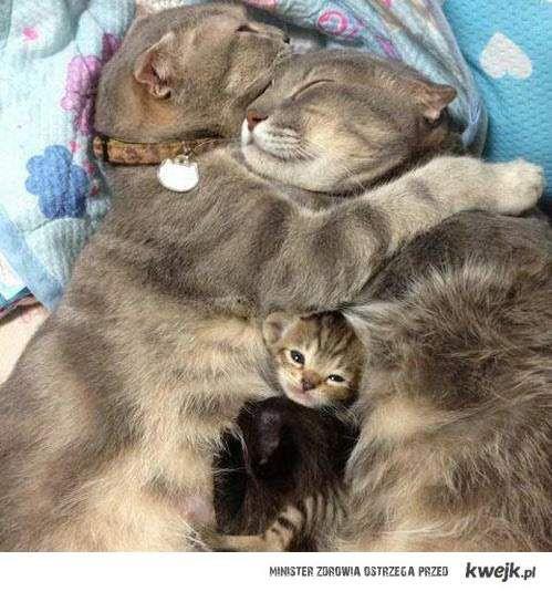 cute cat family