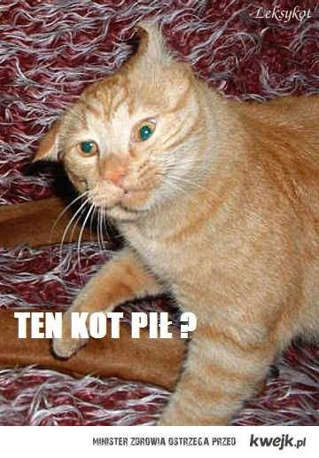 Ten kot pił ?