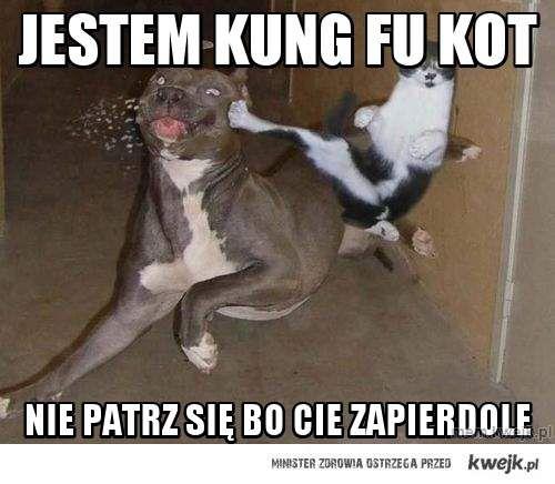 jestem kung fu kot