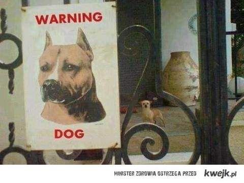 Uwaga na psa