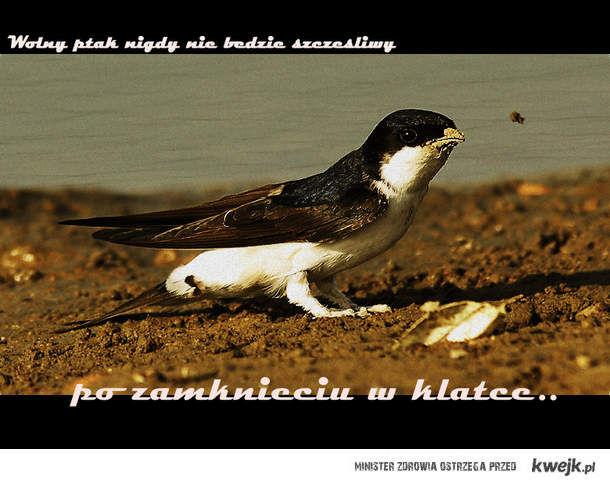 Wolny ptak..