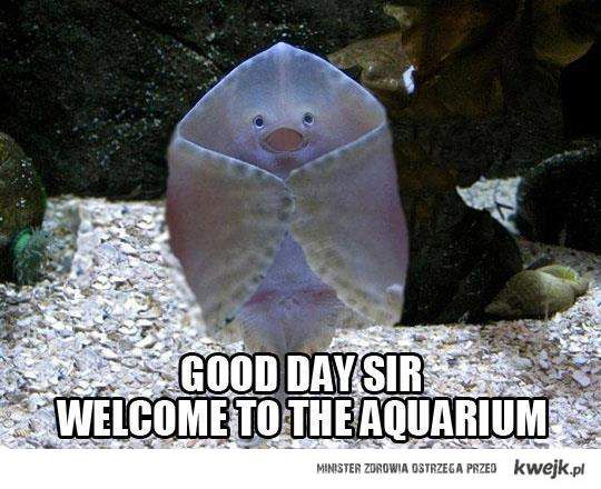 WELCOME TO THE AQUARIUM