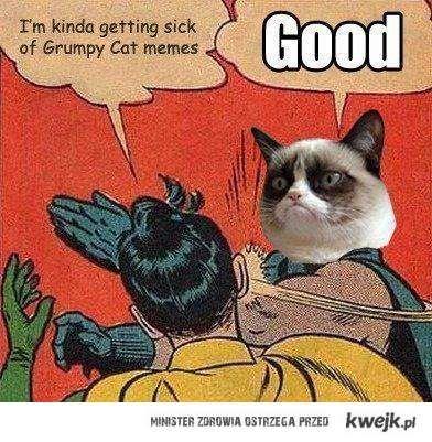 dość zrzędliwego kota