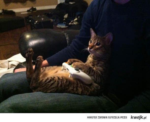 Gamingowy kot