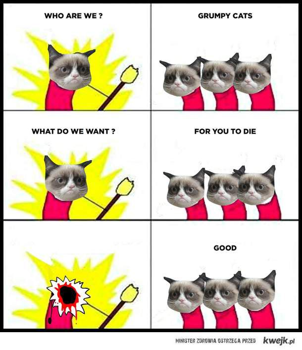 who are we? Grumpy cats