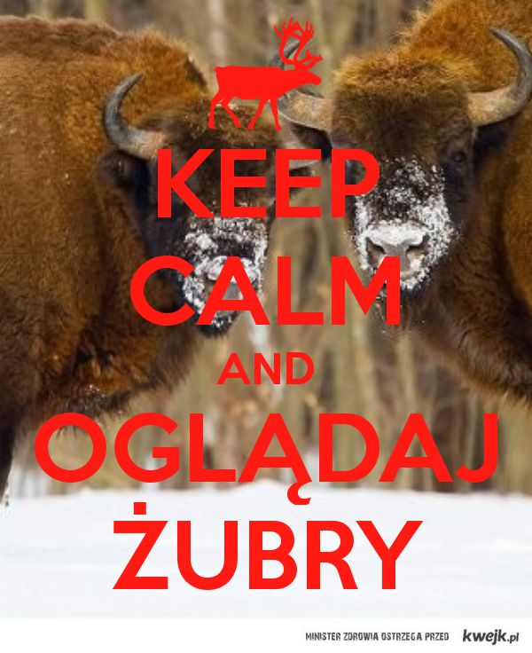 Keep calm and oglądaj żubry!