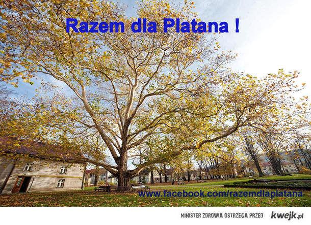 Wesprzyj Platana na Europejskie Drzewo Roku !!!!!