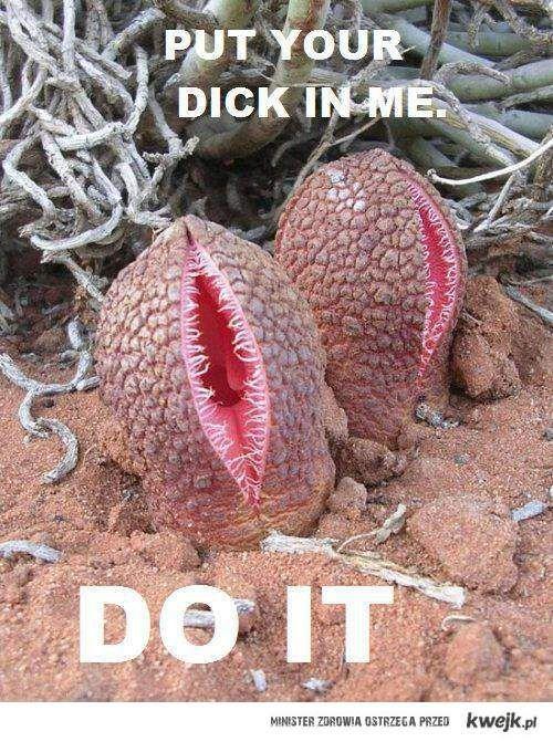 Zrób to