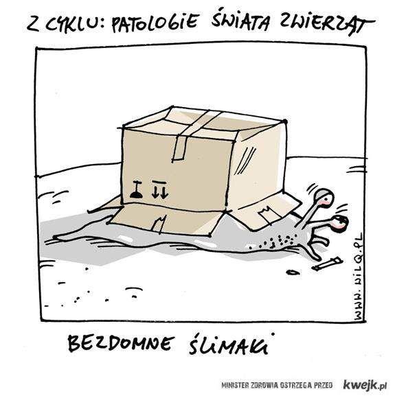 Bezdomne ślimaki