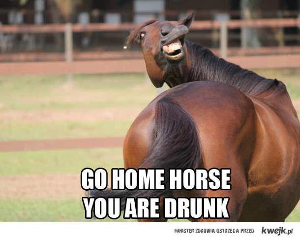 Go home horse