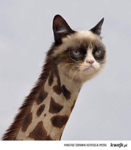 grumpy giraffe