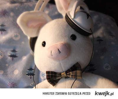 królicza świnka