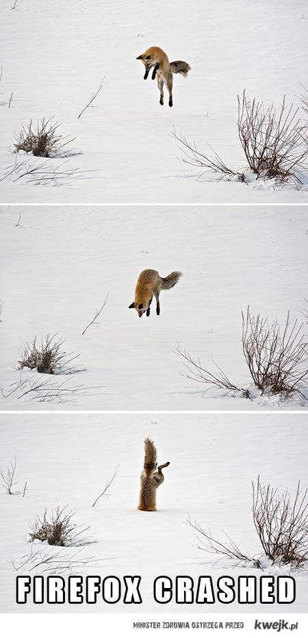 Firefox crashed