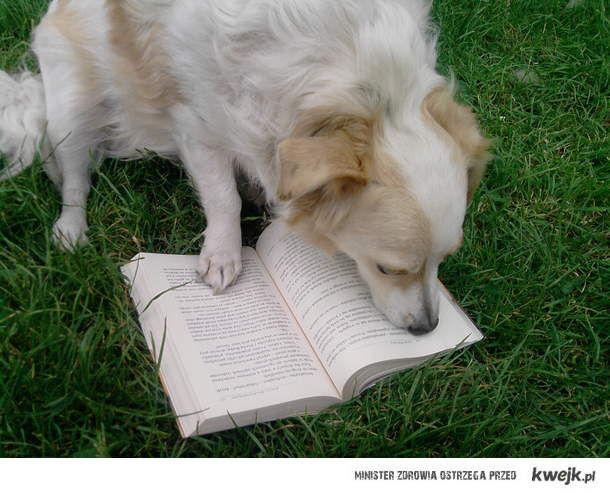 Czytający piesek :P