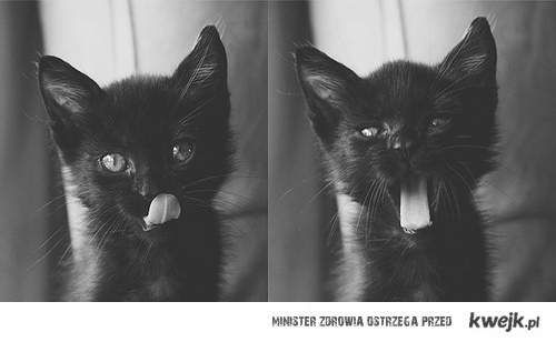 hello cat ;*