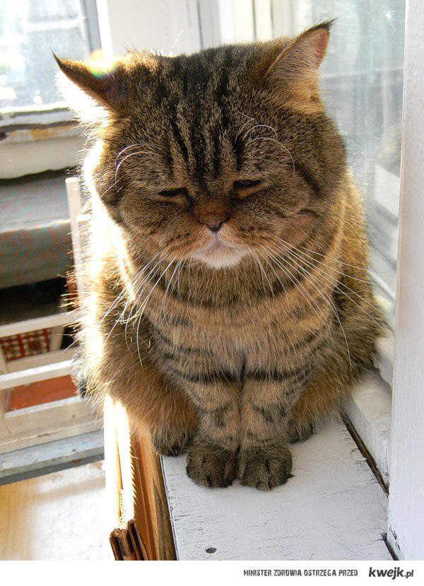 Najsmutniejszy kot na świecie