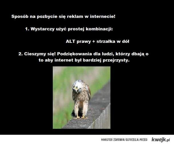 sowa mądra głowa