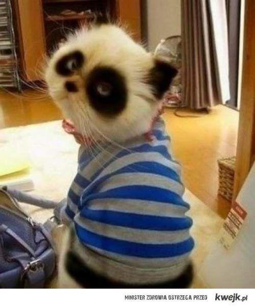 Koto-panda ! ♥