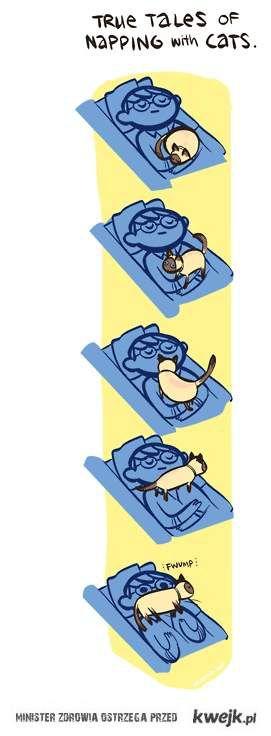 spanie z kotem