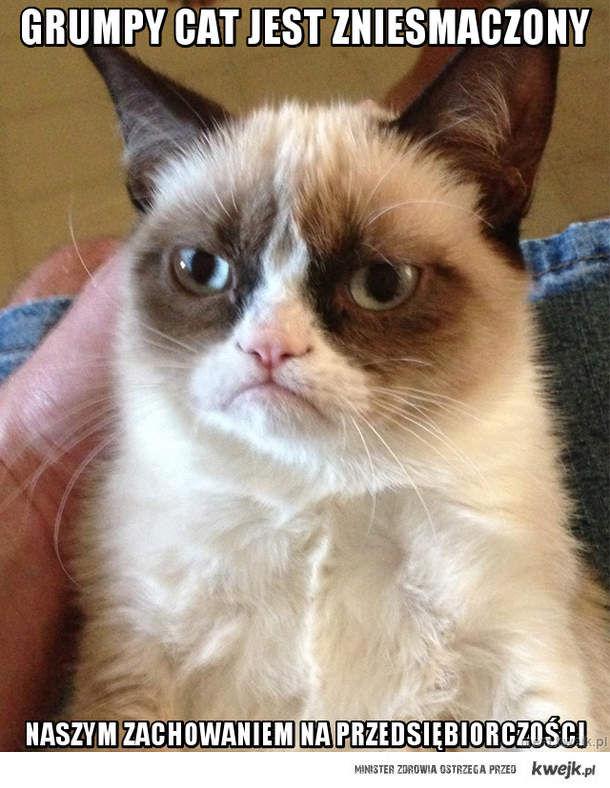 Grumpy cat jest zniesmaczony