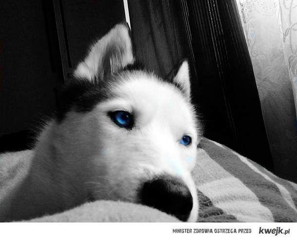 Husky<3