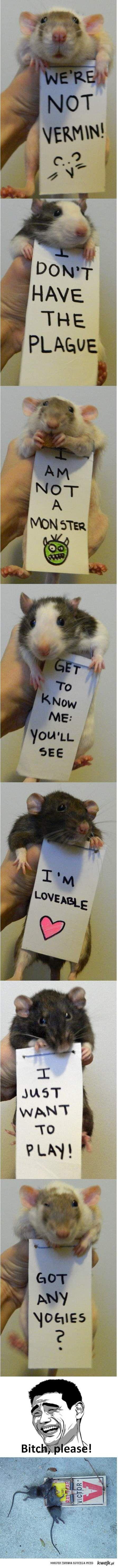 Szczury, Bitch, please