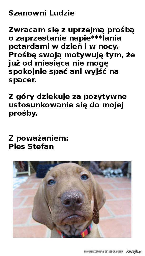 Prośba psa Stefana