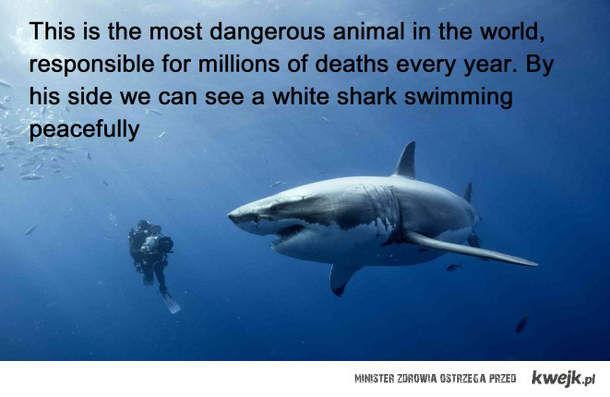 Najbardziej niebezpieczny