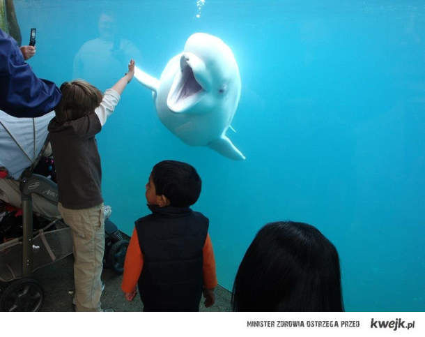 Piona z delfinem