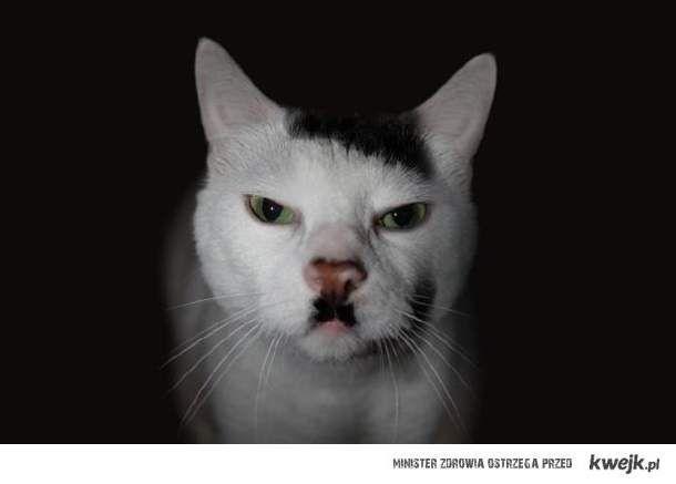 Najbardziej znane koty w Internecie