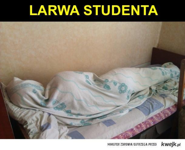 Larwa studenta