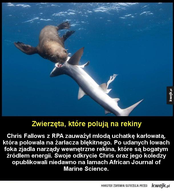 Zwierzęta, które polują na rekiny