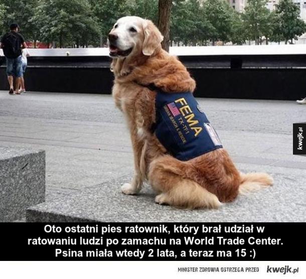 Ostatni pies ratunkowy