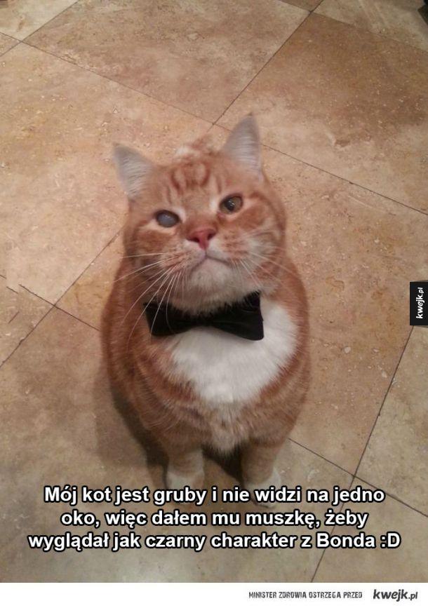 Mój koteł
