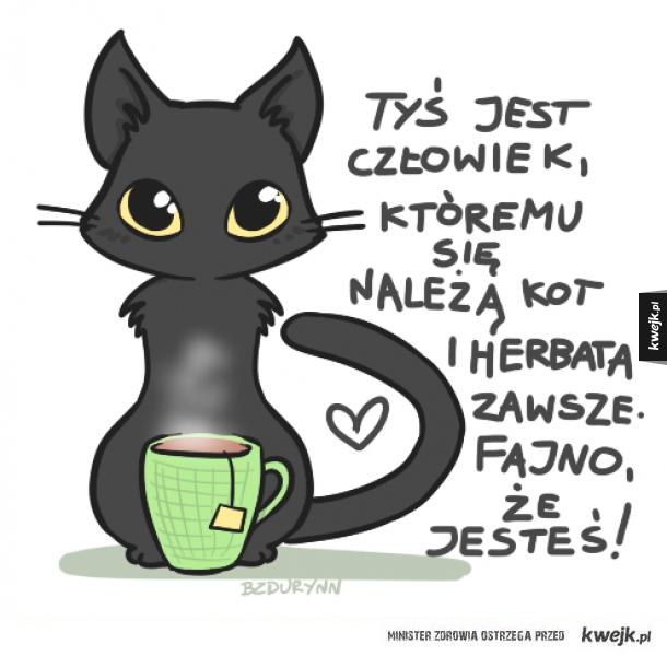 Kot ci się należy