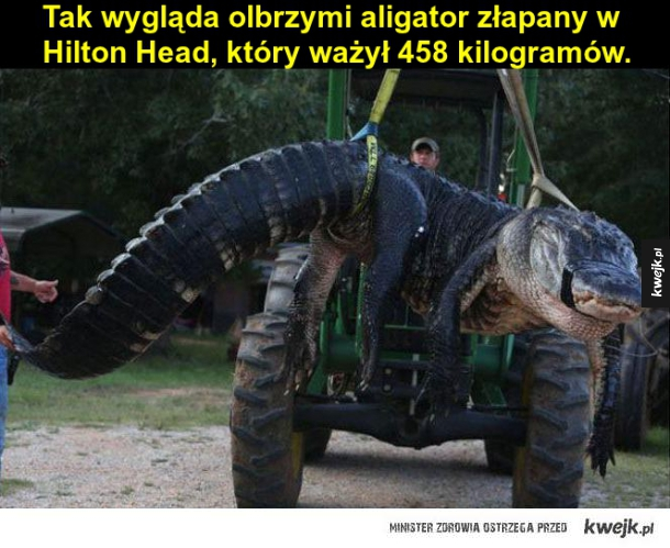 Olbrzymi aligator
