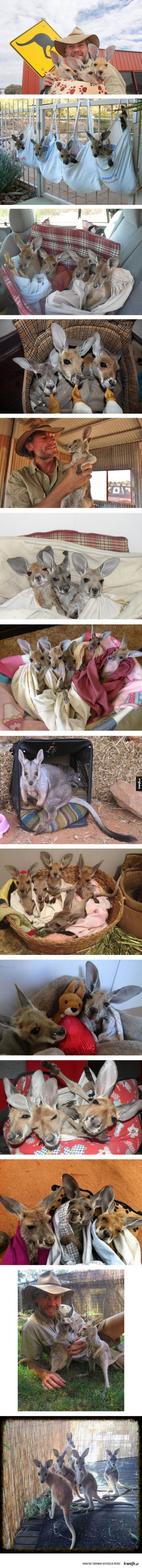 Schronisko dla kangurów