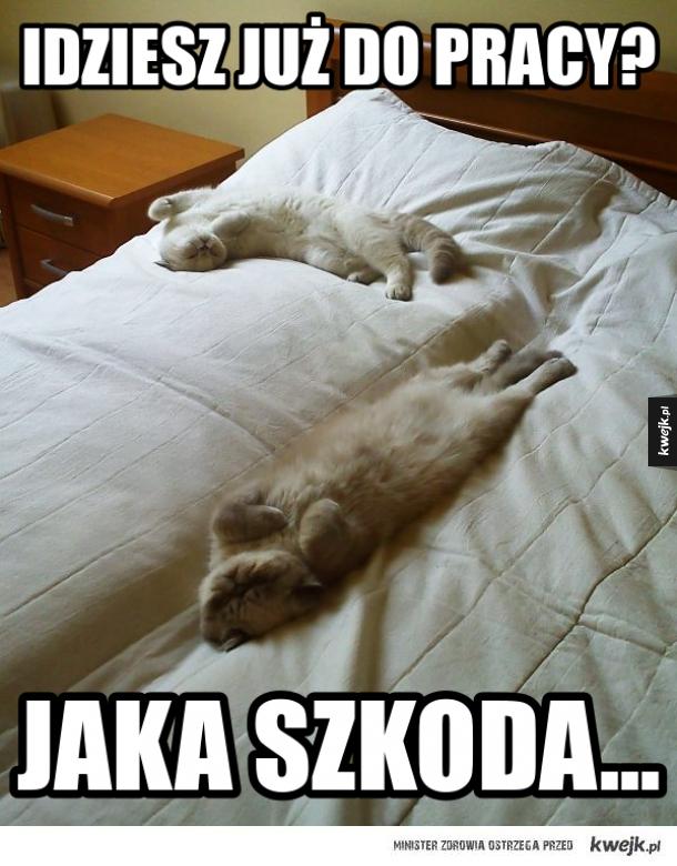 Koty mają za dobrze