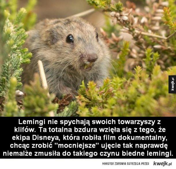 Fakty i mity na temat zwierząt